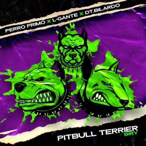 Pitbull Terrier Biry