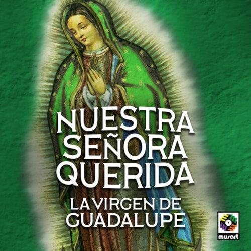 Nuestra Señora Querida La Virgen De Guadalupe