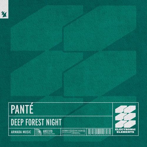 Deep Forest Night